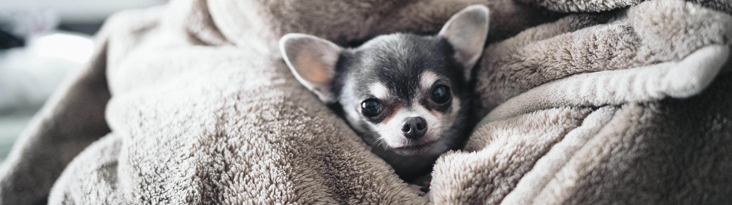毛布の正しい使い方を伝授!快眠お助けナビ